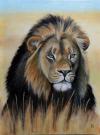 Lev - savana