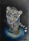 Levhart mládě