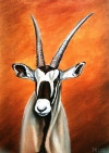 Oryx jihoafrický