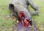 poached-rhino-photo-via-george-herald1 thumb