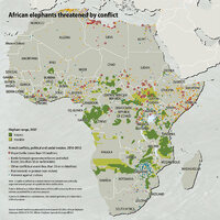 african-elephants-threatened-by-conflict ceab