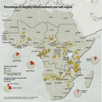 percentage-of-illegally-killed-elephants-per-sub-region 333f